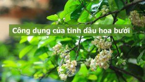 cong dung tinh dau hoa buoi