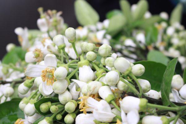 tinh dau hoa buoi nguyen chat